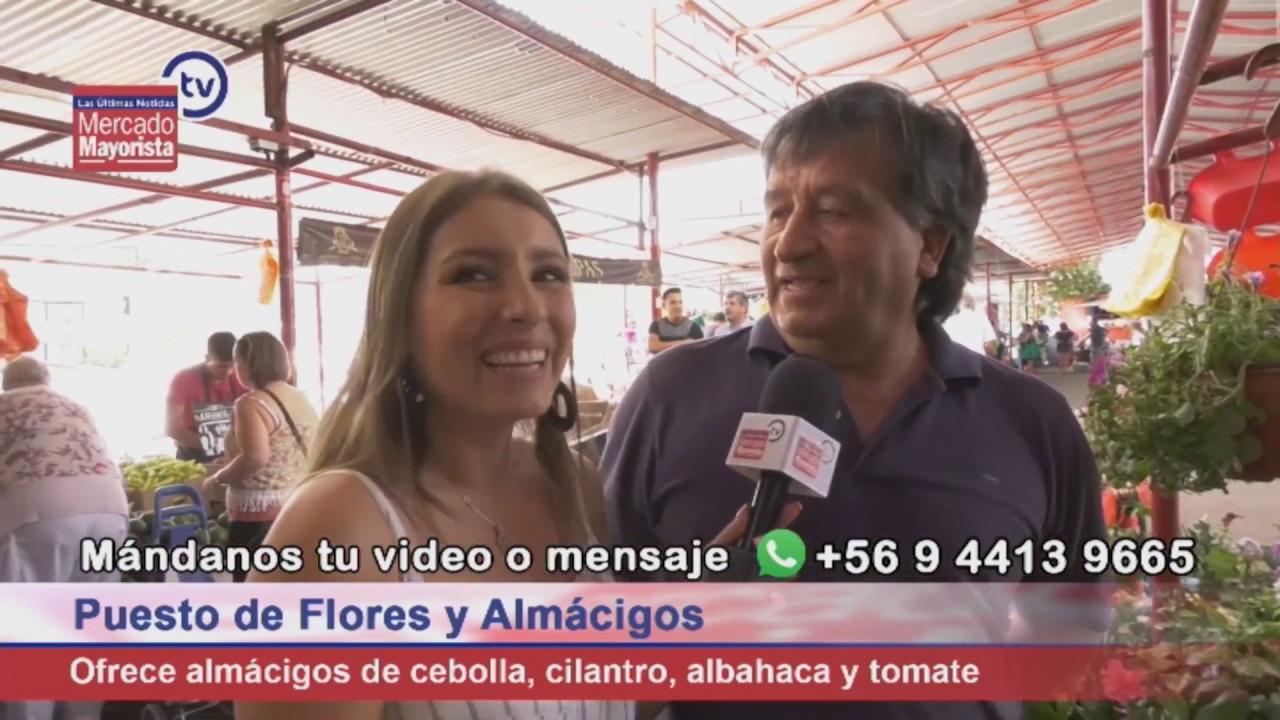 Ofertas de flores y almácigos en la fera Juan Pinto Durán